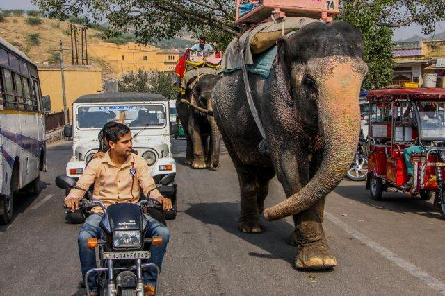 Немного снимков дорожного движения в Индии