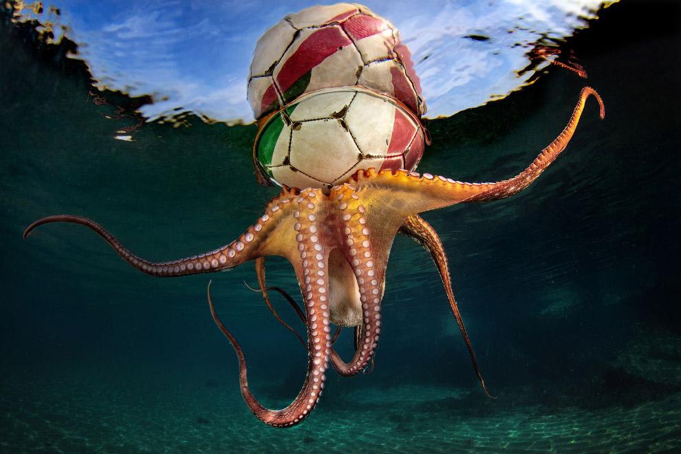 Победители конкурса подводной фотографии Underwater Photographer of the Year 2020