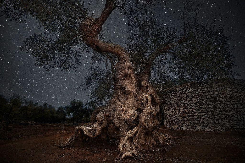 Портреты старейших в мире деревьев под звездным небом от Бет Мун