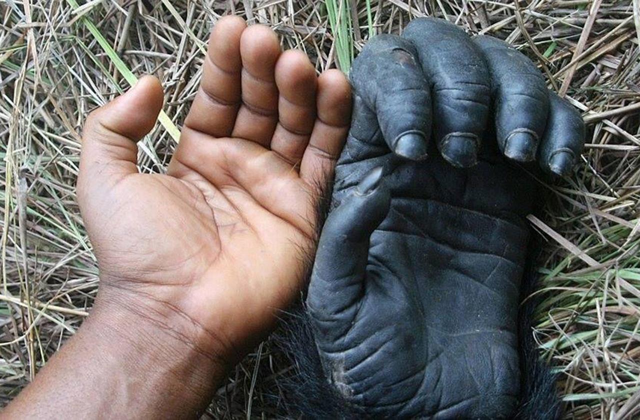 Почему у человека пальцев именно по пять на руках и ногах