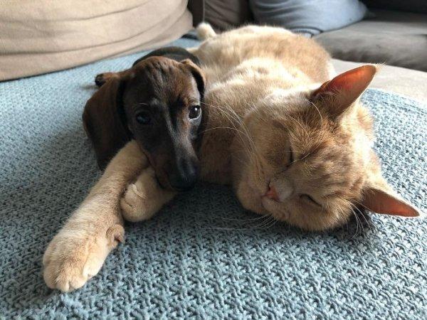 Собаки и коты, которые смогли обрести любящих хозяев
