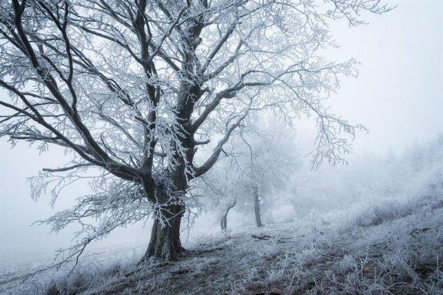 Художественные фотографии зимнего леса от Хейко Герлихера