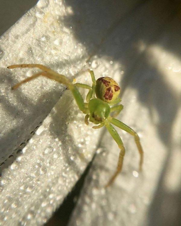 Ад арахнофоба: красота пауков в объективе