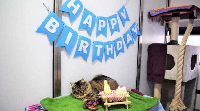 Сотрудники приюта устроили праздник для одинокой кошки