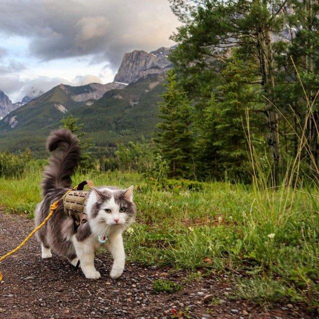 Кот по кличке Гэри, который любит ходить в горы