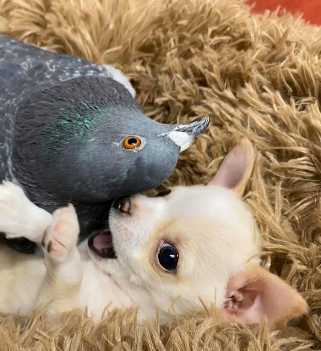 Дружба собаки, которая не может ходить, и голубя, который не умеет летать