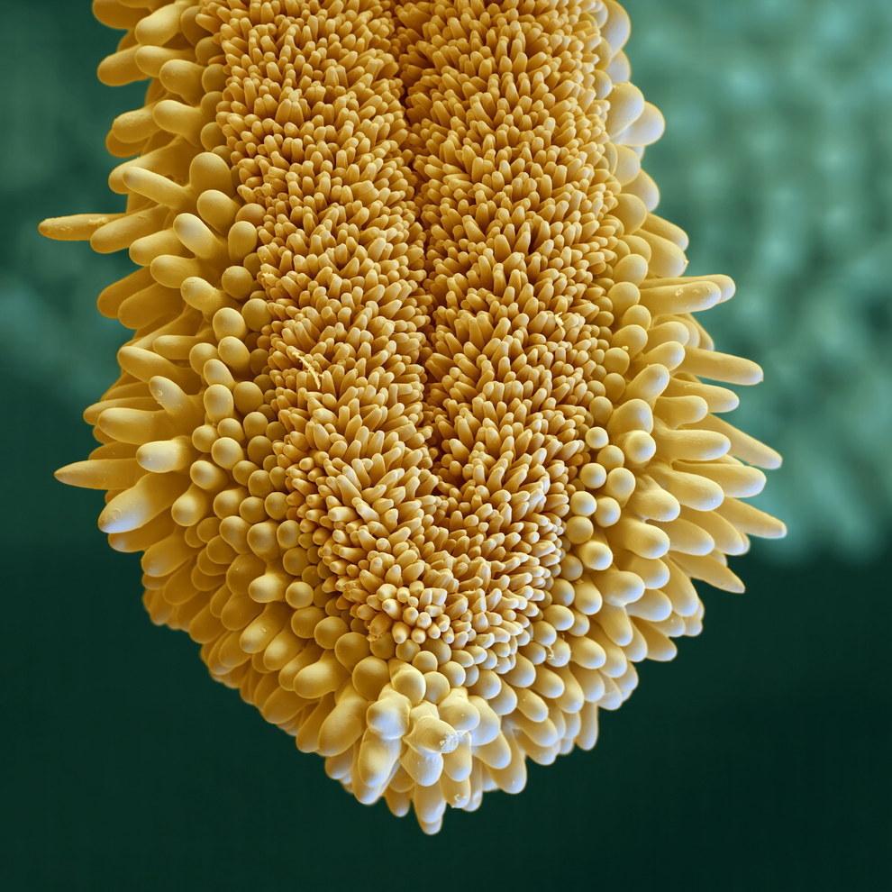 Удивительная красота цветов под микроскопом