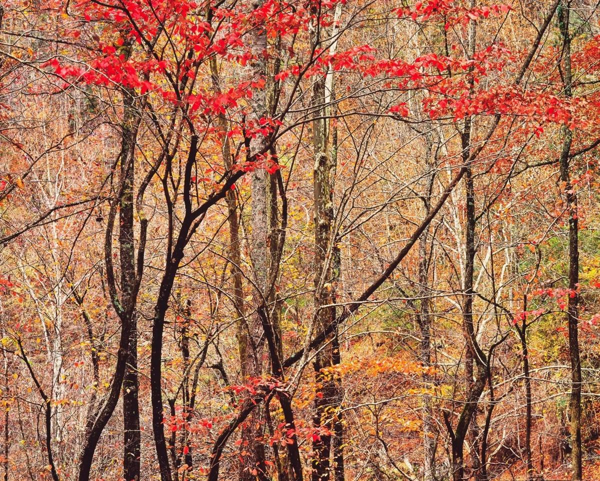 Красота деревьев на снимках Кристофера Бёркетта