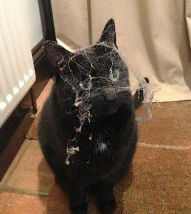 Черные котики что-то замышляют
