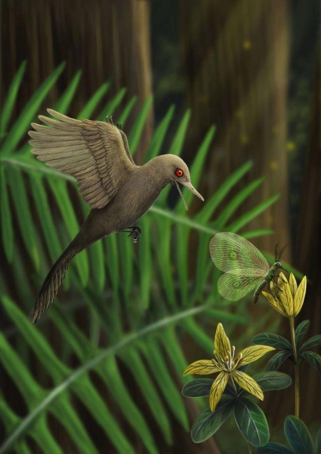 Мезозойский голубь: в Мьянме обнаружили самого маленького динозавра