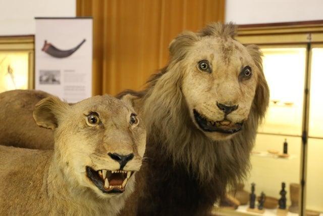 Шедевры мастеров таксидермии, которые можно найти в музеях