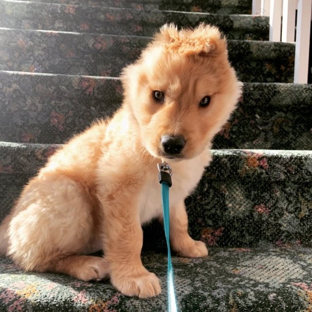 Собака-единорог по кличке Рэй прославилась в сети