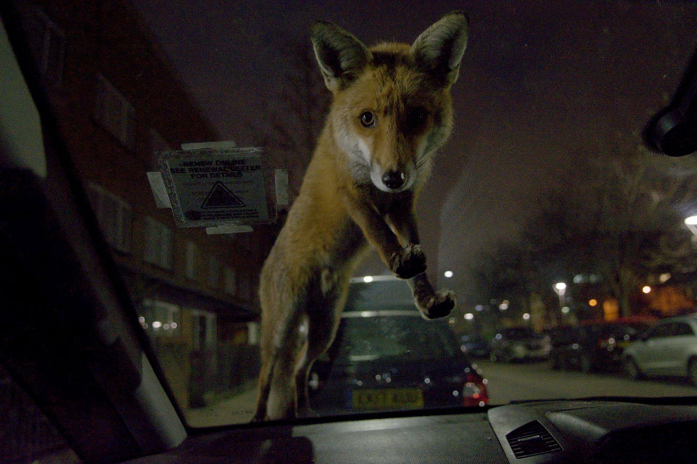 Победители фотоконкурса Mammal Photographer 2020