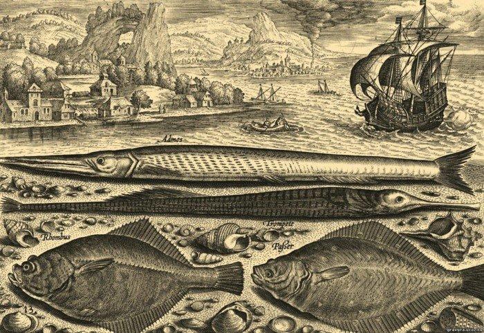 Почему мореплаватели практически не ловили рыбу?
