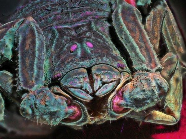 Что можно увидеть в ультрафиолетовом свете