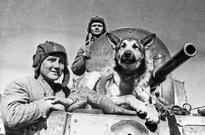Как собаки помогали во время Великой Отечественной войны