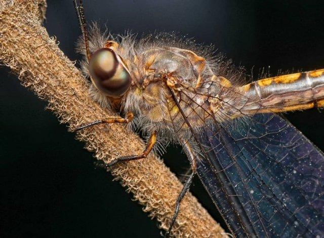 Красочные снимки милых пауков, жуков, змей и прочих тварей