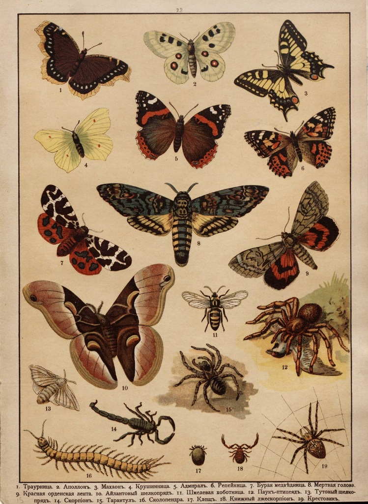 Царство животных в картинах, 1903 год