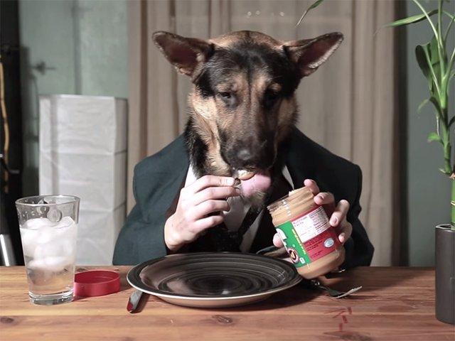Люди делают снимки своих собак с человеческими руками