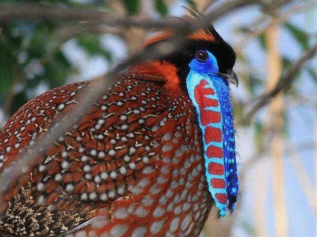 Удивительные животные, которых такими создала природа