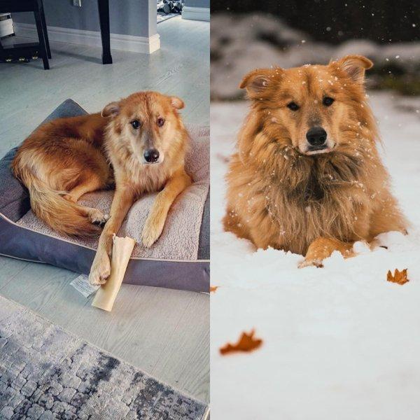Животные на снимках до и после того, как нашли новый дом