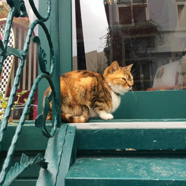 Коты на пустых улицах Стамбула