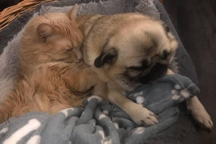 О тёплой любви между котиками и собаками
