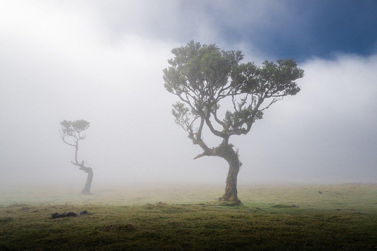 Живописные деревья древнего леса на острове Мадейра