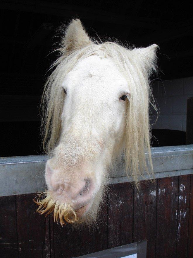 Милые усатые лошадки заряжают позитивом