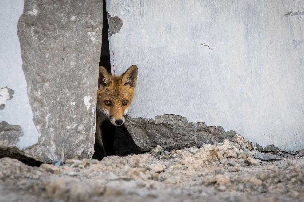 Победители фотоконкурса дикой природы 2020