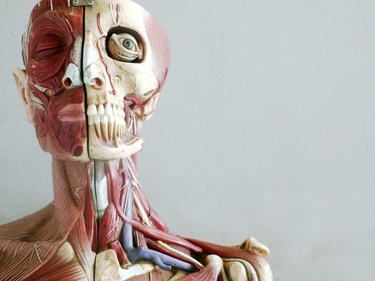 Любопытные вещи о человеческом теле
