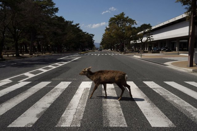 Дикие звери вышли улицы опустевших городов