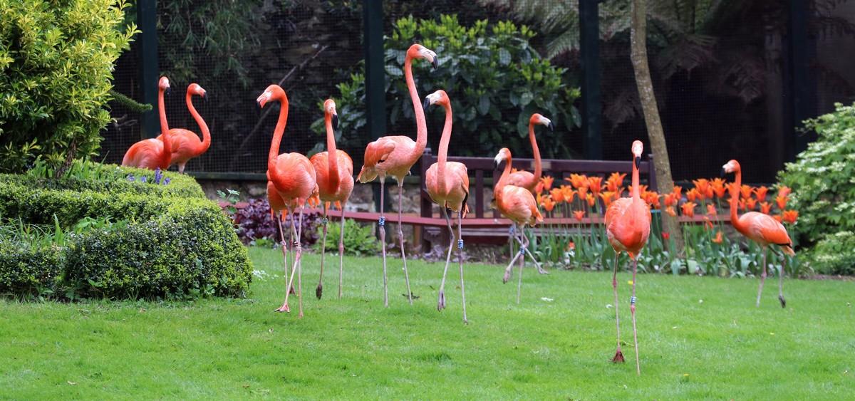Самоизоляция смотрителей в парке дикой природы