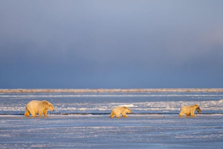 Снимки дикой природы с фотоконкурса #Wild2020 от Agora Images