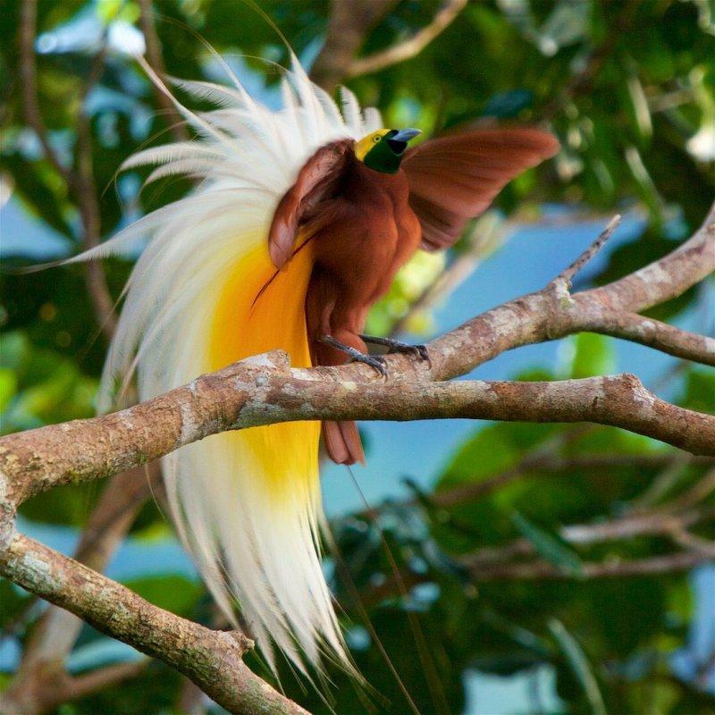 Удивительные и уникальные животные в природе