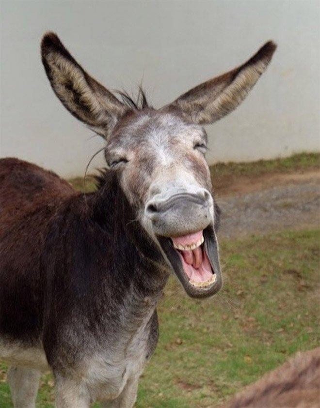 Забавные смеющиеся ослики на снимках