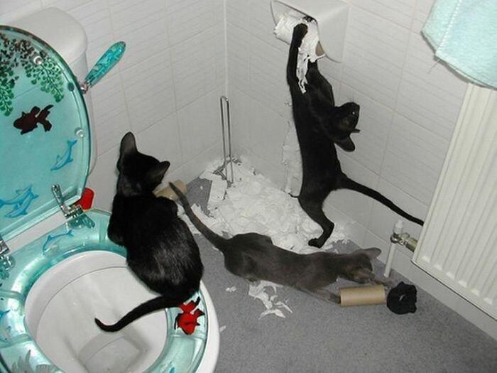 Котики и туалетная бумага
