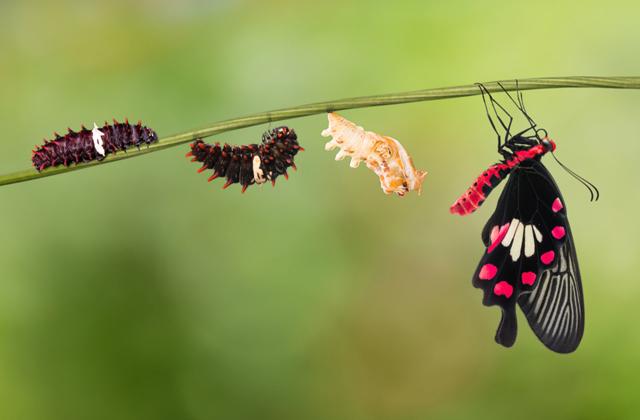 Помнят ли бабочки себя, когда были гусеницами?