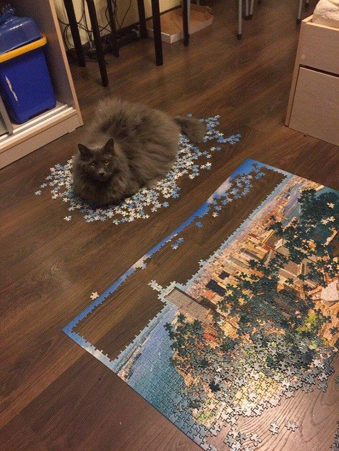 Котики всегда помогут собрать пазлы