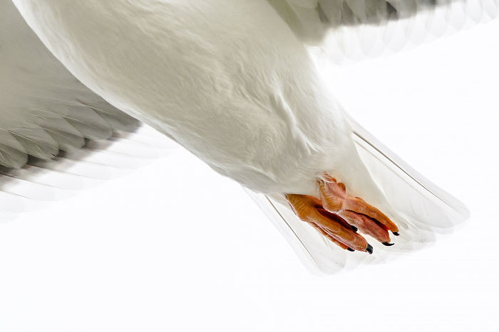 Неудачные фотографии животных, которые не так уж и плохи Животные