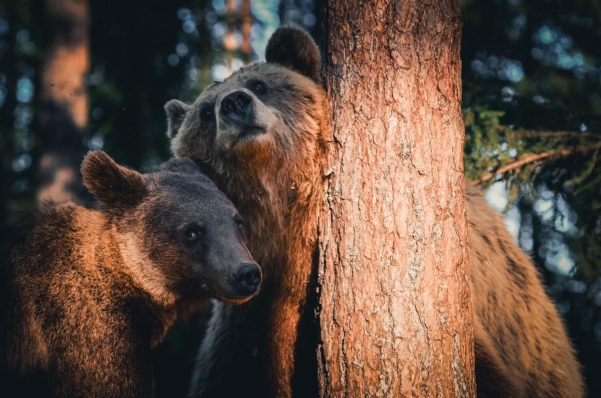 Удивительные портреты диких животных от Консты Пункка