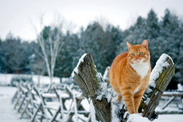 Задорные заборные котики