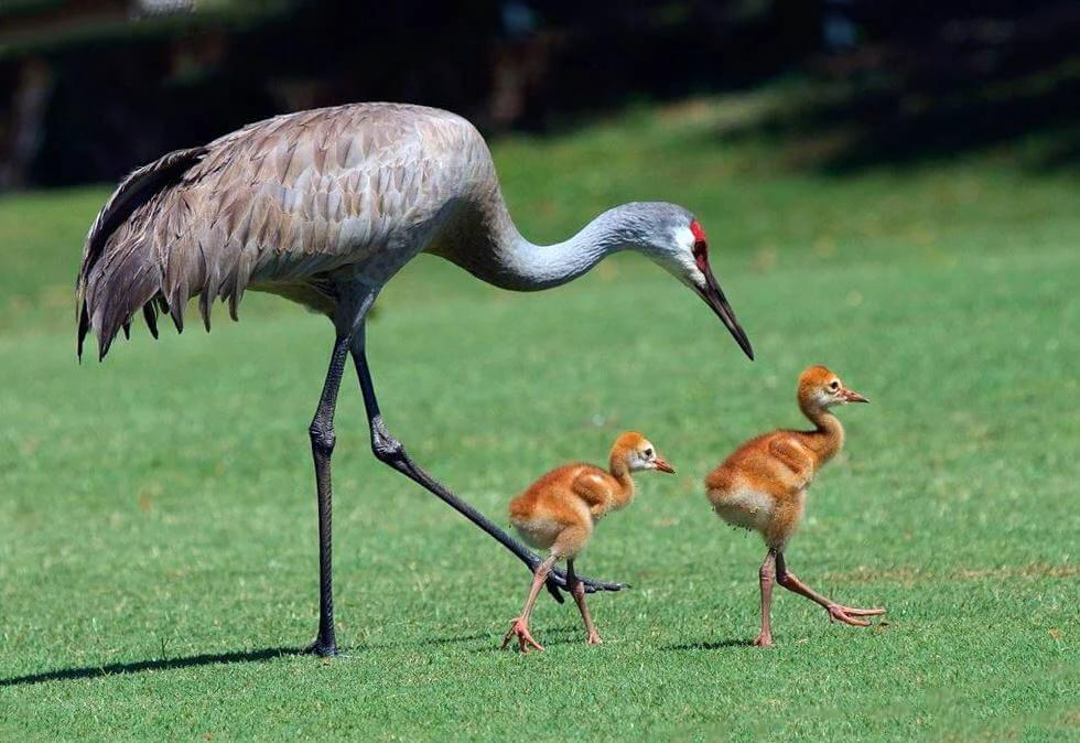 Животные из другой эры, которые дожили до нашей