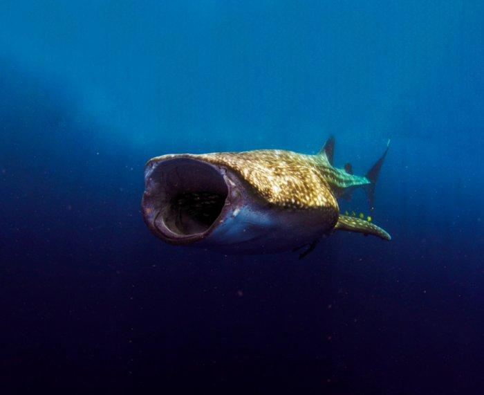 Как киты едят в воде и при этом не захлёбываются