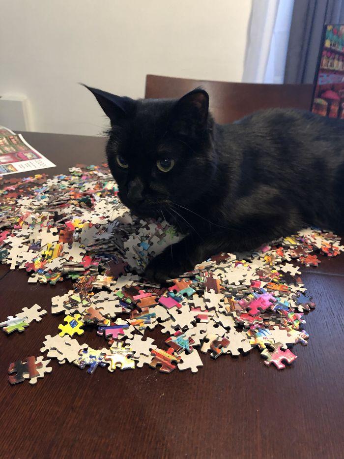 Кошки всегда помогут хозяевам собрать пазлы