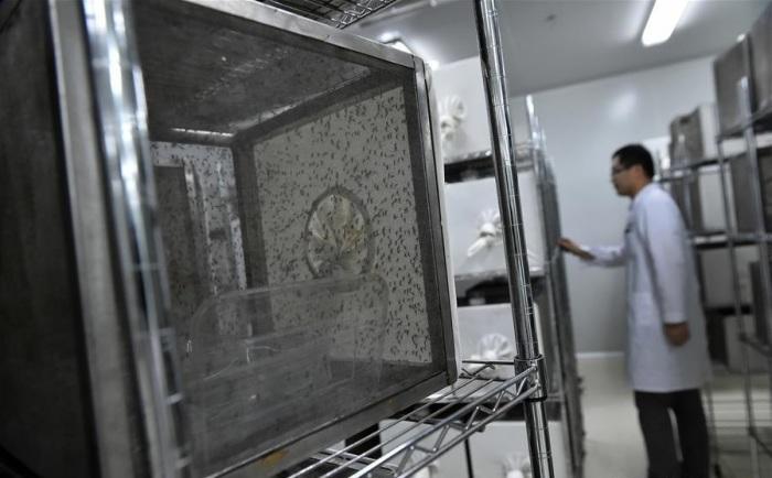Зачем разводят комаров на специальном заводе в Китае