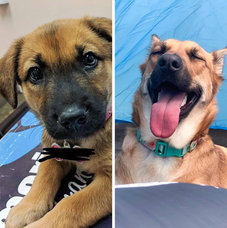 Животные до и после того, как они нашли любящий дом