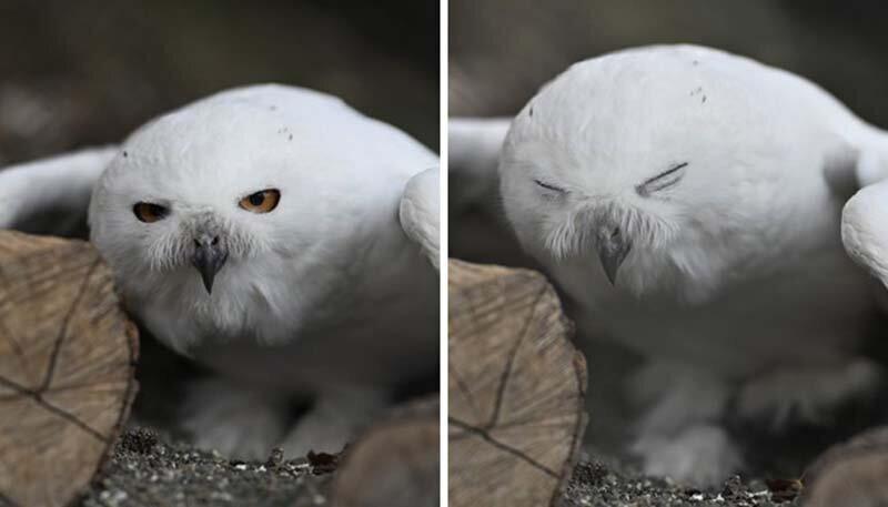 Животные прищуриваются так, будто потеряли очки