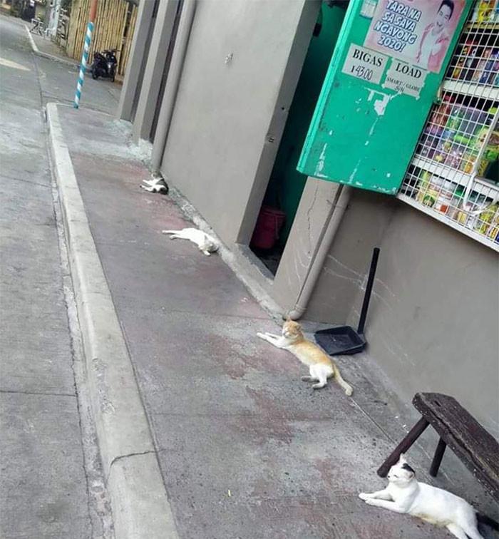 Животные тоже соблюдают социальную дистанцию