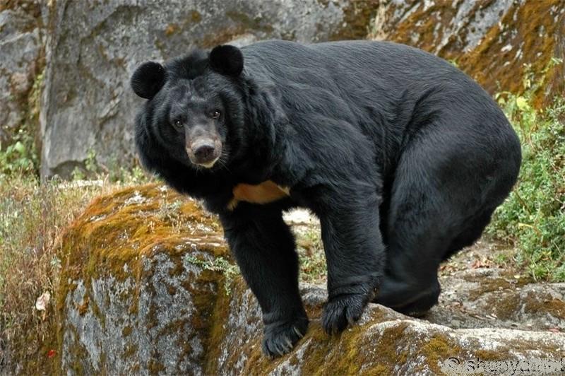 Виды самых больших медведей в мире